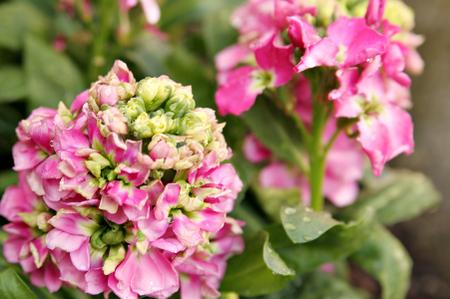 Springplanting_090